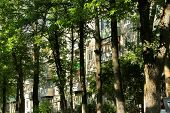 picture of rayon  - Urban jungle - JPG