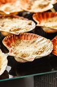 picture of scallop shell  - Scallops in the shell - JPG