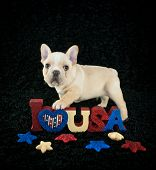 image of french bulldog puppy  - Very cute French Bulldog puppy standing with a I Love U - JPG