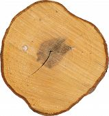 picture of cutting trees  - Top view of a tree stump tree cut - JPG