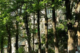 stock photo of rayon  - Urban jungle - JPG