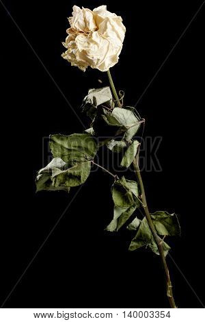 Dried Flower On Background
