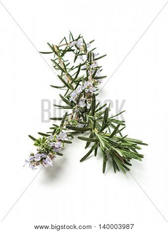 Twig of rosemary on white background