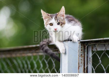 one stray kitten walking outdoors in summer