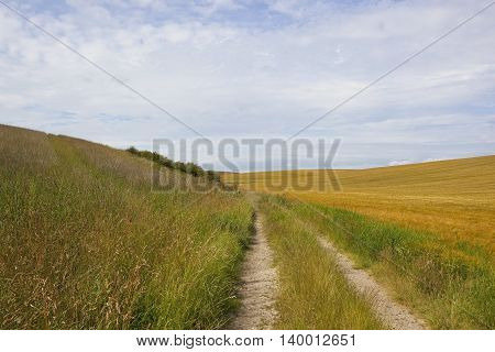 Farm Track And Barley Fields