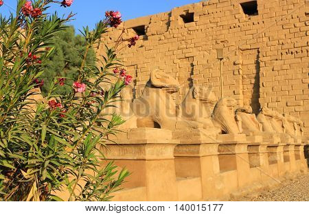 Avenue of Sphinxes in Luxor Egypt on a beautiful sunny day