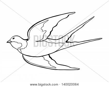 Swallow bird black white isolated sketch illustration vector