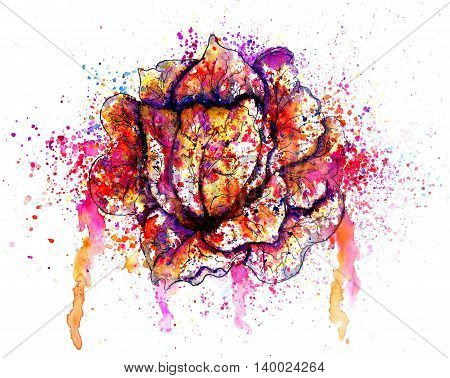 Colorful Cabbage Watercolor