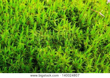 Green Moss At Pine Forest At Summer