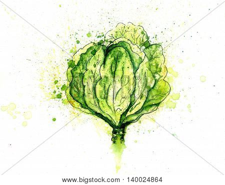 Green Cabbage Watercolor