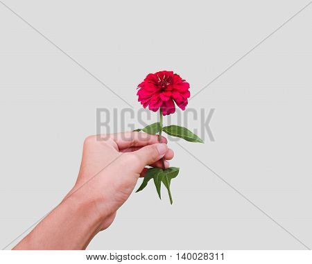 Red blossom in a hand isolated on background