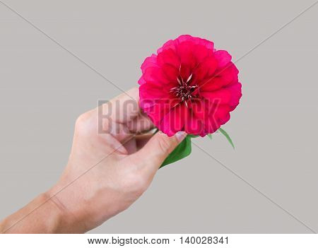 Red blossom in a hand from top perspective