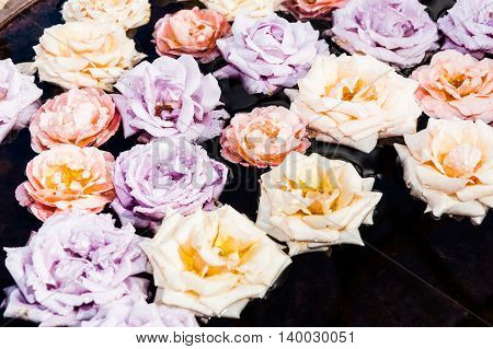 Selection of soft colors roses floating on pond closeup