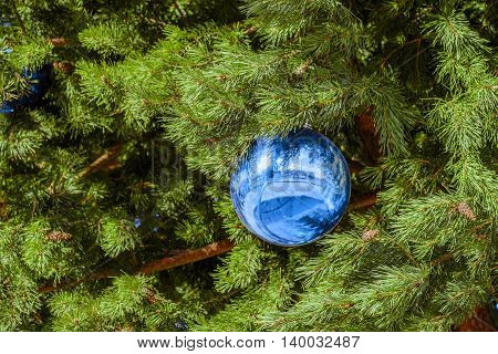 Christmas toy blue ball on the festive pine branch