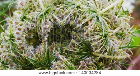 flower bud ,fed by solar ,vitamin land and  beautiful flower