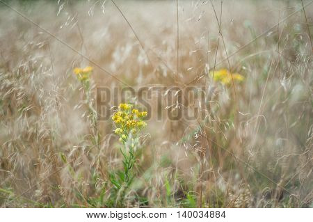 Floral Background With Wild Flowers