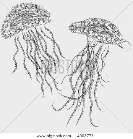 Vector illustration of two jellyfish style graphics Drawing two jellyfish to sail  graphics style