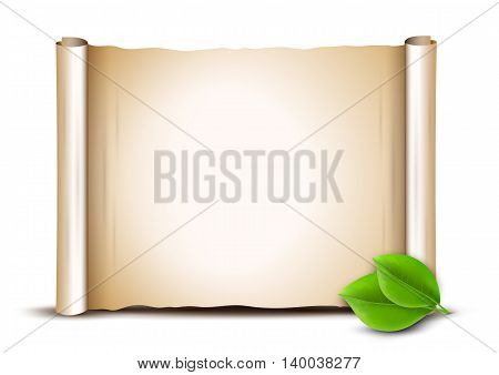 Old scroll and green leaves isolated on white background. Paper banner.