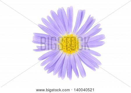 close up of the flower isoalted on white