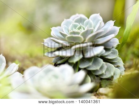 Succulent plant with selective focus and copy space. Agave or desert plant in the sunlight, close-up shot.