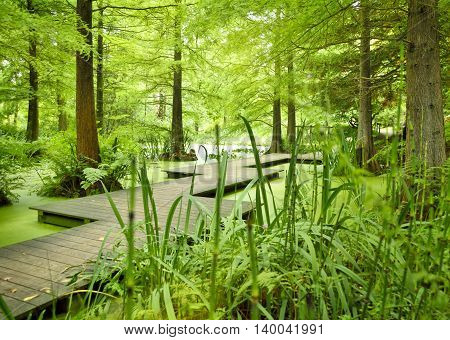 Modern footpath or gangplank over a pond in the woods. Old trees standing in a moor or swamp in the forest. Sunbeam and smooth light falling through the tree tops.