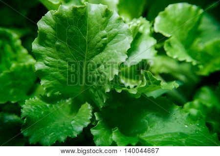 Close up photo of a green salad leaves.
