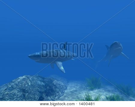 Two Sharks Under Water