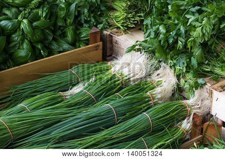 food market - bundle of spring onions basil and parsley
