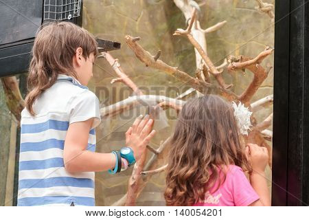 two young adorable kids - boy and girl - having fun in zoo, animal park