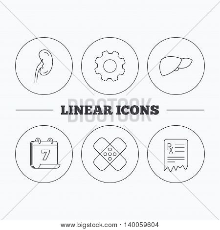Liver, medical plaster and prescription icons. Kidney linear sign. Flat cogwheel and calendar symbols. Linear icons in circle buttons. Vector
