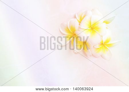 Blooming white Plumeria or Frangipani flowers on white floor background with vintage light effect