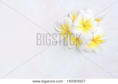 Blooming white Plumeria or Frangipani flowers on white floor background