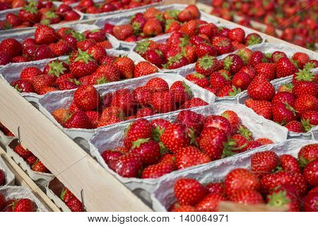 strawberries at market stand - strawberry fruits in boxes