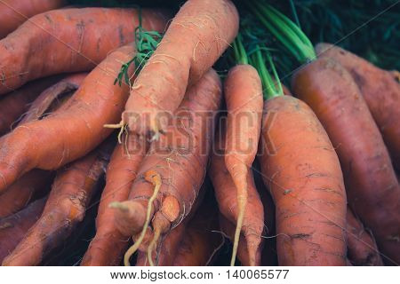 Bunch Of Bio Carrots Closeup , Raw And Unwashed