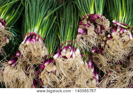 Spring Onion Closeup - Bundles Of Onions