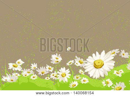 bright chamomile field