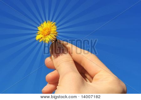 Flower in hand with light beams