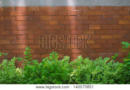 Brick walls adorned with leaves and tree wallpaper.