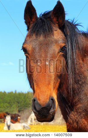 Horse on rural farm