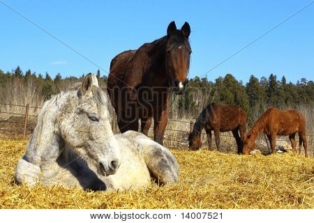 Horses on rural farm
