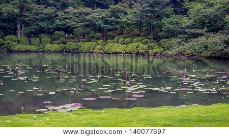 Japanese pond with lily pads and a nice view of a forest in the background.