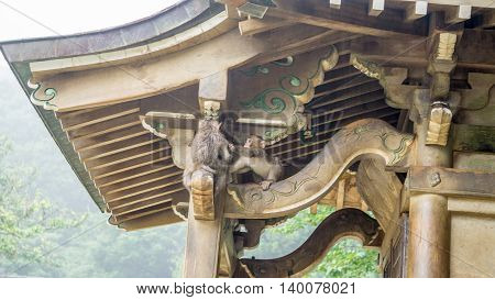 Two Japanese Macaques playing on a shrine in Japan.