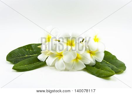 Plumeria flower  and green leaf isolated on white background.The national flower of Laos
