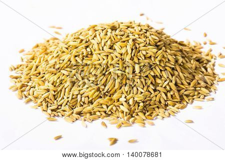 Paddy isolated on white background.Raw food or Rice has not yet been processed.