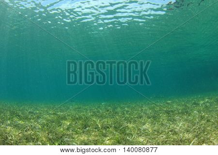 Underwater in ocean with seagrass