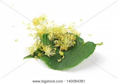Tilia cordata (linden buds flower leaf) on white background with shadow.