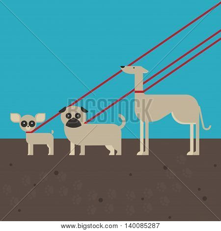 flat dog characters set, cartoon pet animal collection chihuahua, pug and greyhound on the lead