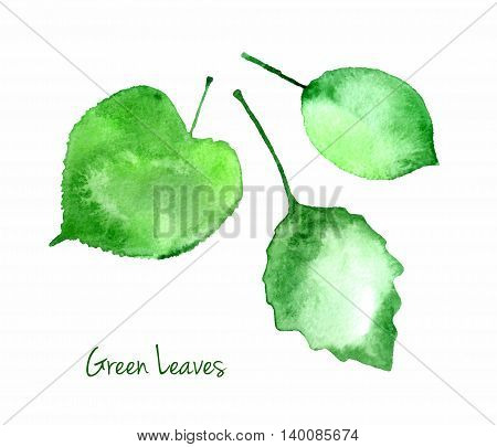 Vector set of green summer watercolor leaves isolated on white background for you eco design. Abstractwatercolour paper grain textured leaves.