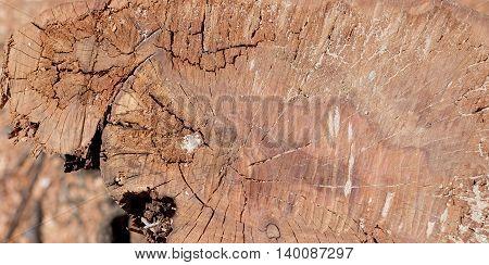 Cores Trees Texture