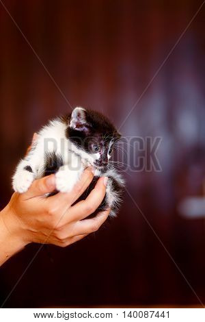 frightened sweet little kitty in hands of young girl